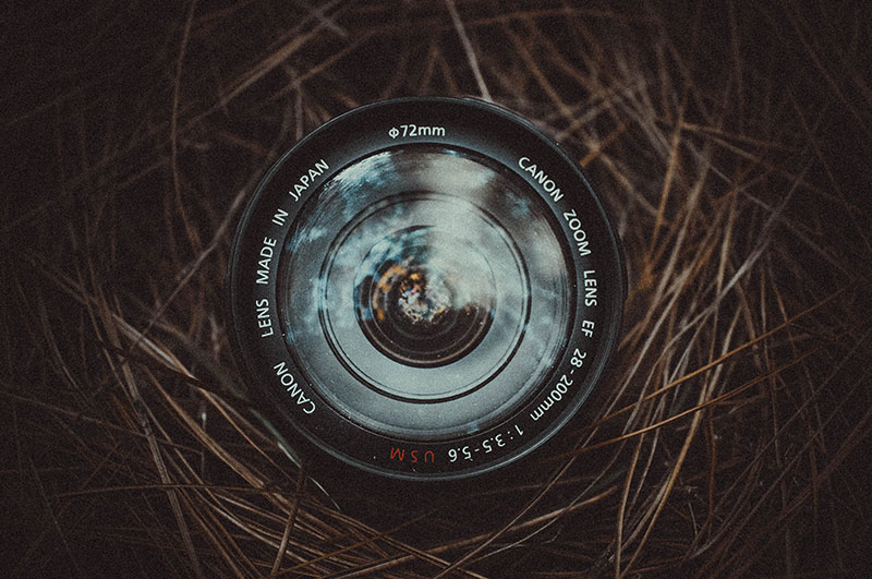 Camera lens wrapped around pine needles