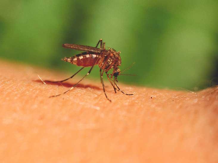 668-Mosquito_Bites-732x549-thumbnail